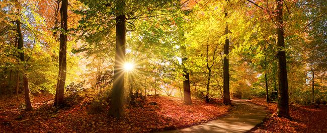 Abendsonne. Foto: Smileus /Adobe Stock