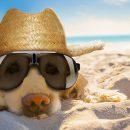 Sonnenbrillen sind so cool. Foto: Javir Borsch / Adobe Stock